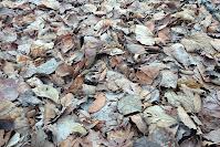 Visne blader i naturen brytes ned til kompost