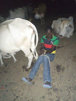 Mwingi - 4 used condoms found as Kenyan man is caught red handed having SEX with a cow(PHOTO).