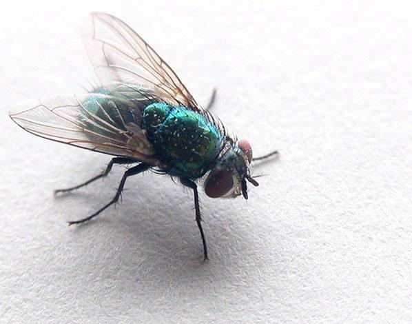 http://2.bp.blogspot.com/-x0fUVK3BE58/VncfXIr0DuI/AAAAAAAAO1o/7SS0JDDqIVc/s1600/fly-ananta-super.blogspot.jpg