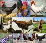 Dasar-Dasar Klasifikasi Makhluk Hidup