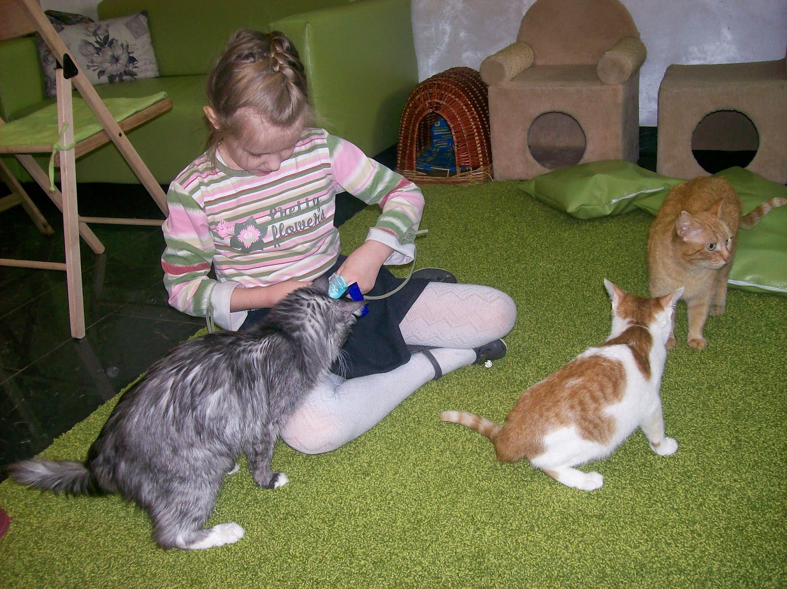 Настасья подкармливает котиков