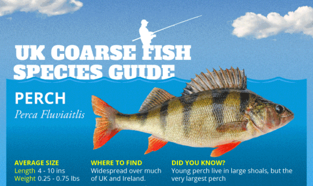 UK Coarse Fish Species Guide