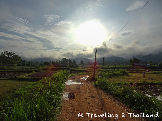 Rice-field in Pua, North Thailand