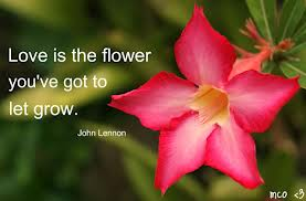 flowers quotes famous quotes