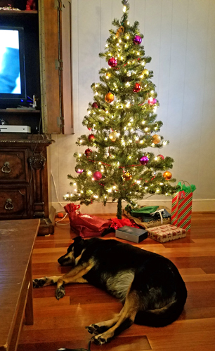 image of Zelda the Black and Tan Mutt sleeping underneath a Christmas tree