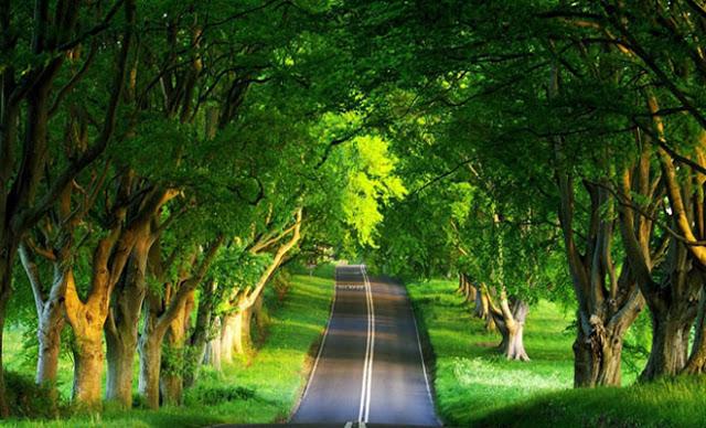 Βρες τι δέντρο είσαι