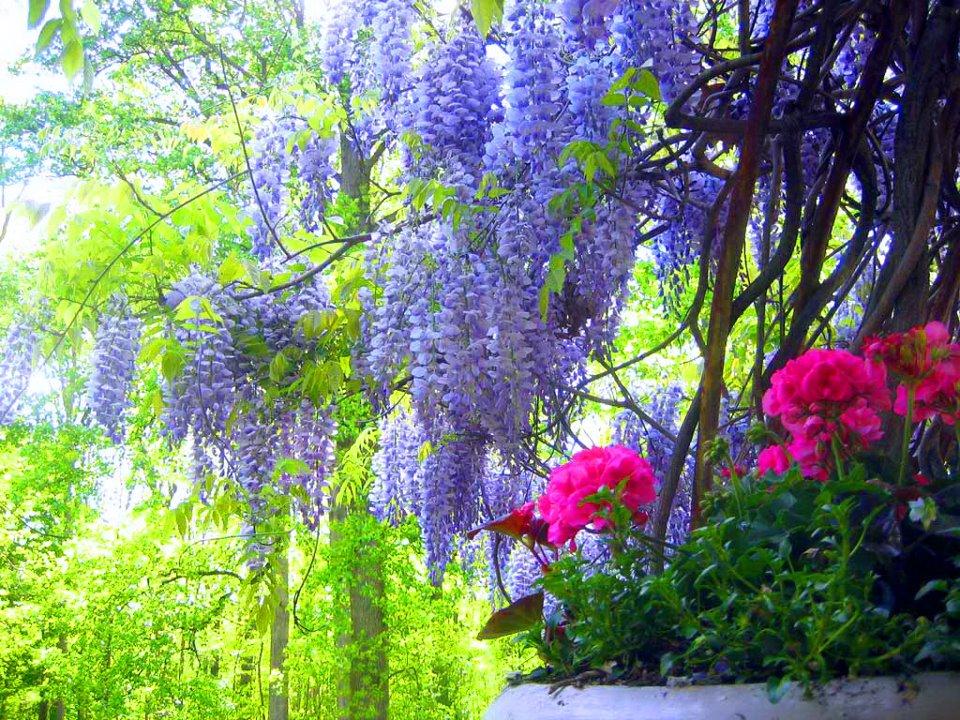 Paisajes Con Flores Naturales