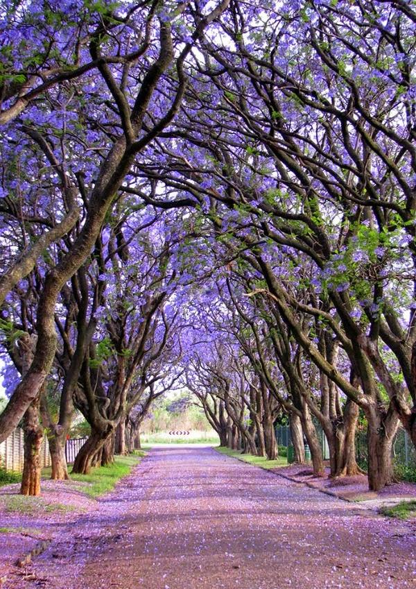 Pretoria, Sudáfrica