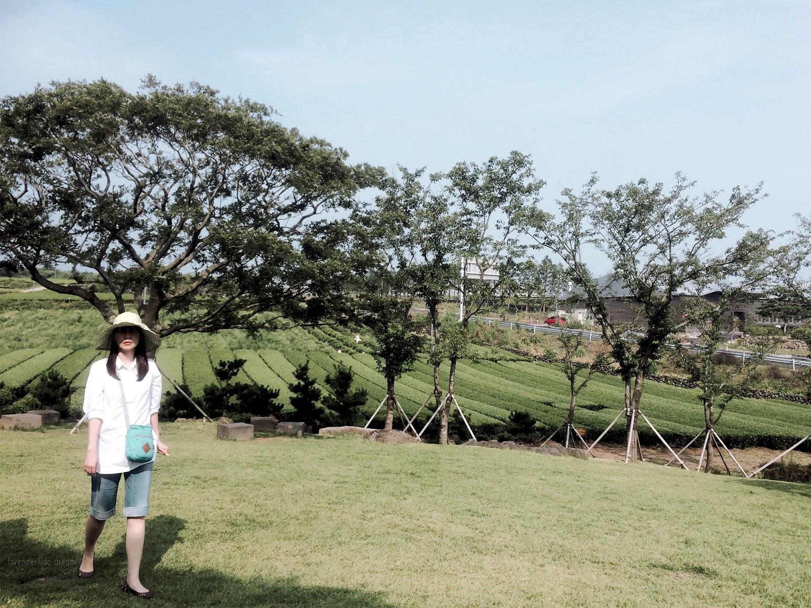 South Korea, Yonsei University, YISS 2014 Field Trip to Jeju Island, OSULLOC Tea Museum, Seogwang Tea Garden