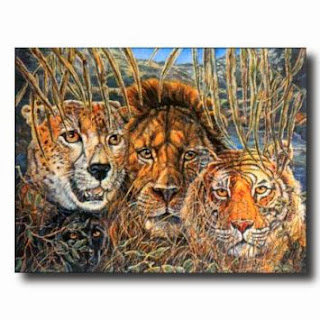 African Phases Cat Lion Tiger Animal Wildlife Wall Picture 16x20 Art Print