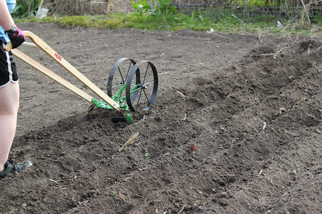 We tried out this new gardening tool. What did we think? See our verdict in the Hoss Wheel Hoe review.