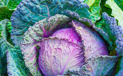 colored cabbage widescreen resolution hd wallpaper