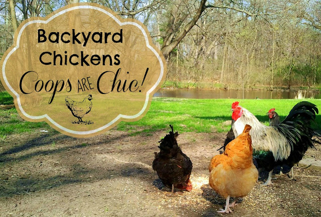 chicken coops are chic