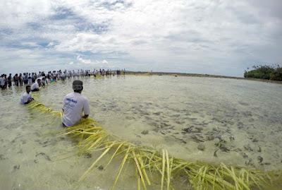 Tradisi Mane'e di Sulawesi Utara