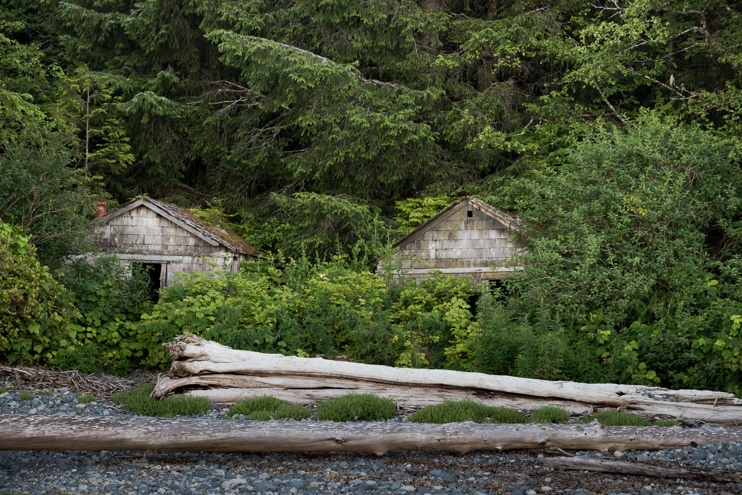 Roosevelt Cabins at the Mouth of the Nahwitti River on the North Coast Trail