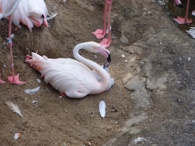 A Trip To The Zoo | Bioparc Fuengirola 4