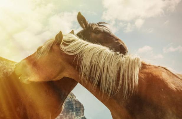 egua-cavalo-horses-equinos-vetarq-galeria-animal