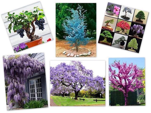 zdjęcia egzotycznych drzew