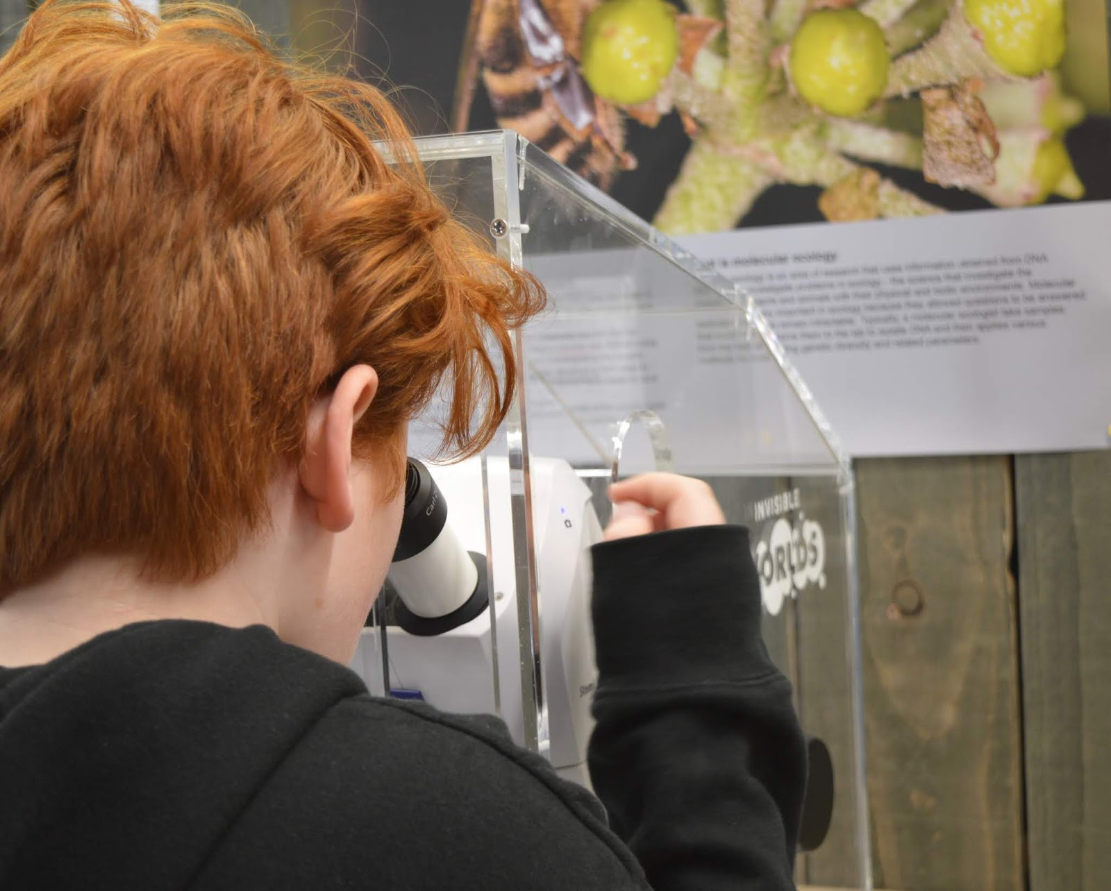 10 Reasons to Visit the Eden Project in Winter  - using microscopes in the lab