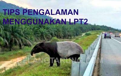 Tapir Di LPT2