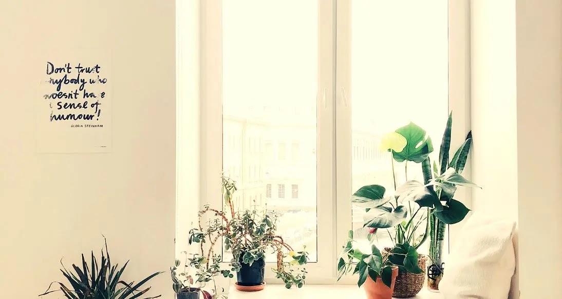 Plantas HERMOSAS que adornan tu hogar y purifican tu OXIGENO