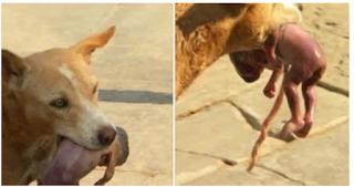 Dog Saves Abandoned Newborn Baby