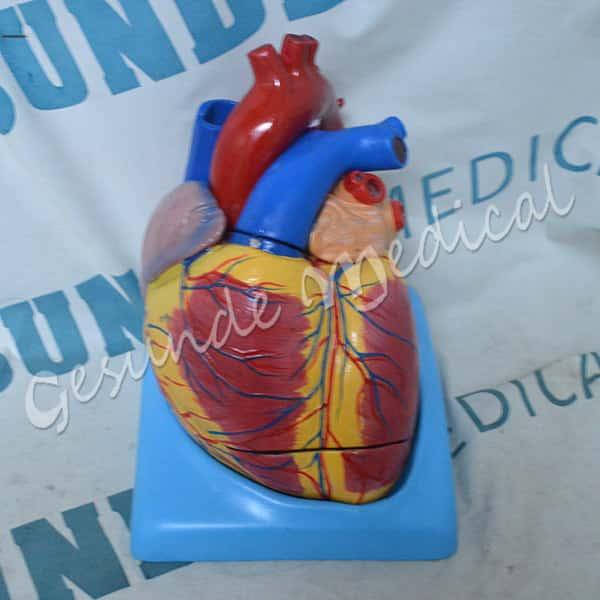 dimana beli torso bagian jantung