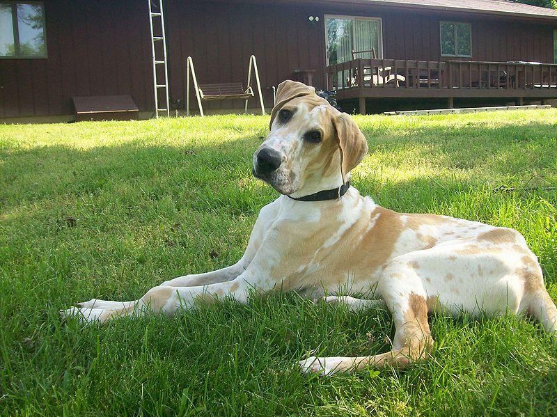 Euthanizing A Dog At Home Co Codamol