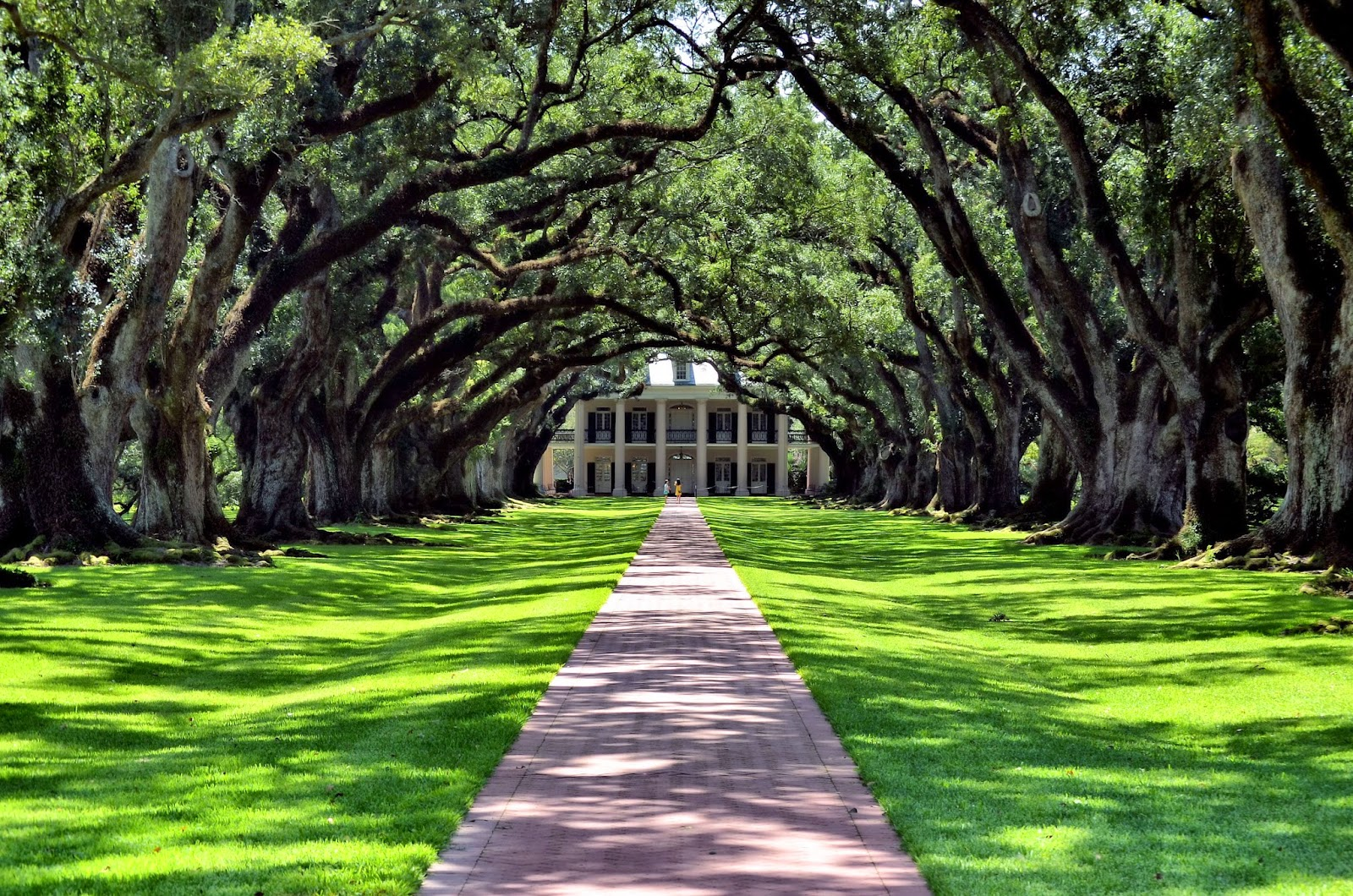 Room With No View: Oak Alley Plantation: An Iconic View ...