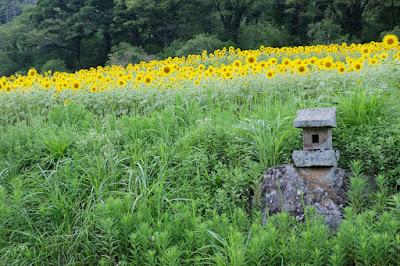 工芸と喫茶ひとつ石の裏のひまわり畑 向日葵と石の祠