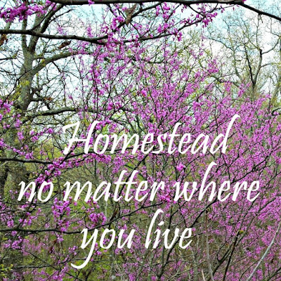 How to homestead, no matter where you live - Oak Hill Homestead