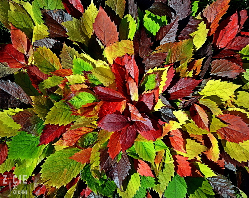 liscie jesienne, kolorowe liscie, pazdziernik sezonowe owoce pazdziernik sezonowe warzywa, sezonowa kuchnia, pazdziernik, zycie od kuchni