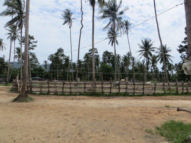 загон буйволов Таиланд