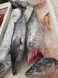 Jual Ikan Tenggiri Murah Kualitas Terbaik di Jakarta