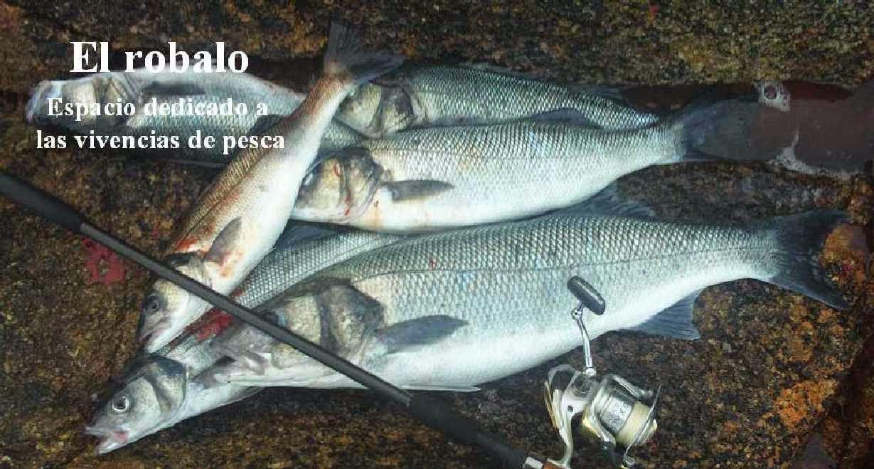 Calendario Lunar 2020 Pesca.El Robalo Que Es Mejor Para La Pesca La Pleamar O La