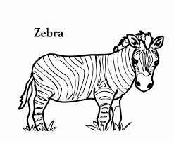 Baby Zebras Coloring Pages With Name