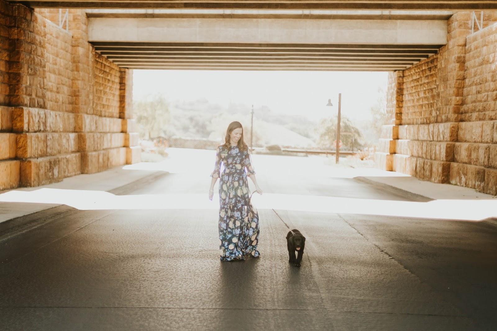 black lab puppy photoshoot