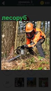 В лесу лесоруб бензопилой спиливает дерево в костюме и шлеме