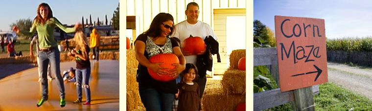 Marana pumpkin patch and fall festival tucsontopia.
