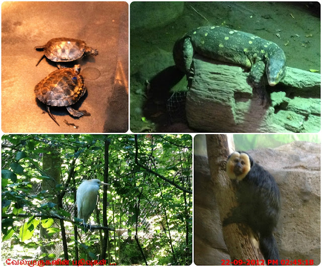 Animals in the Oregon Zoo