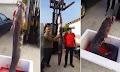 Μουγγρί 38 κιλων έβγαλαν ψαράδες στον Κορινθιακό (φώτο - βίντεο)