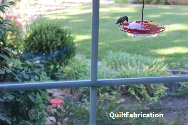 hummingbird on a Droll Yankee feeder