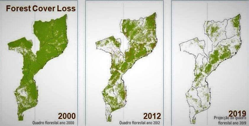 Deforestation in Mozambique