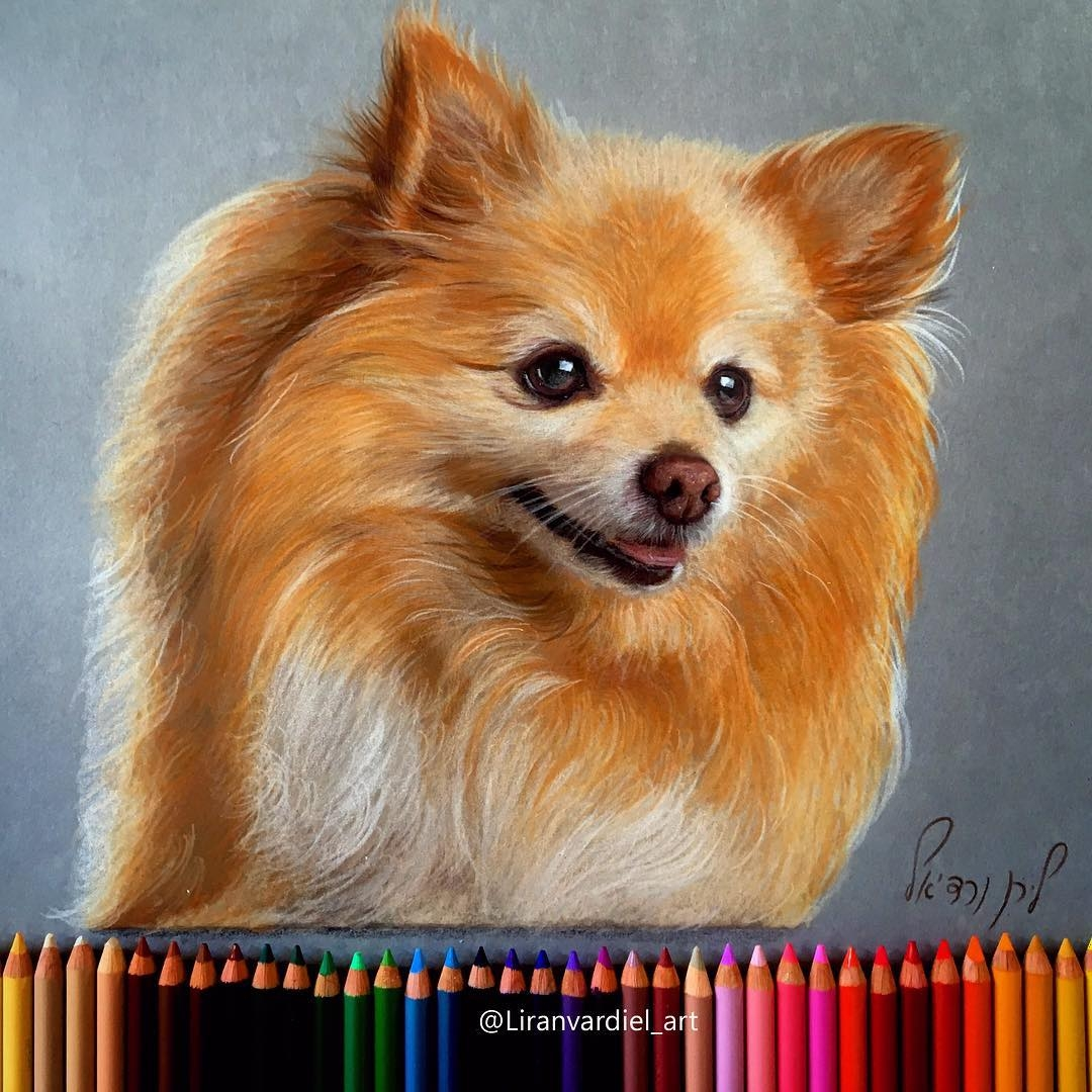 01-Liran-Vardiel-Animal-Drawings-using-Colored-Pencils-www-designstack-co