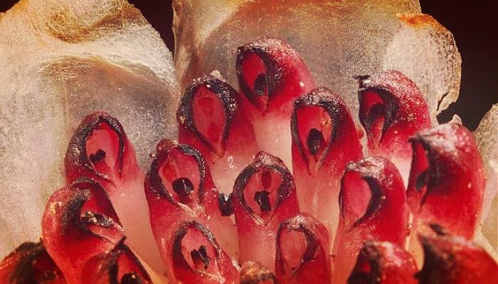 Plantas en peligro de extincion
