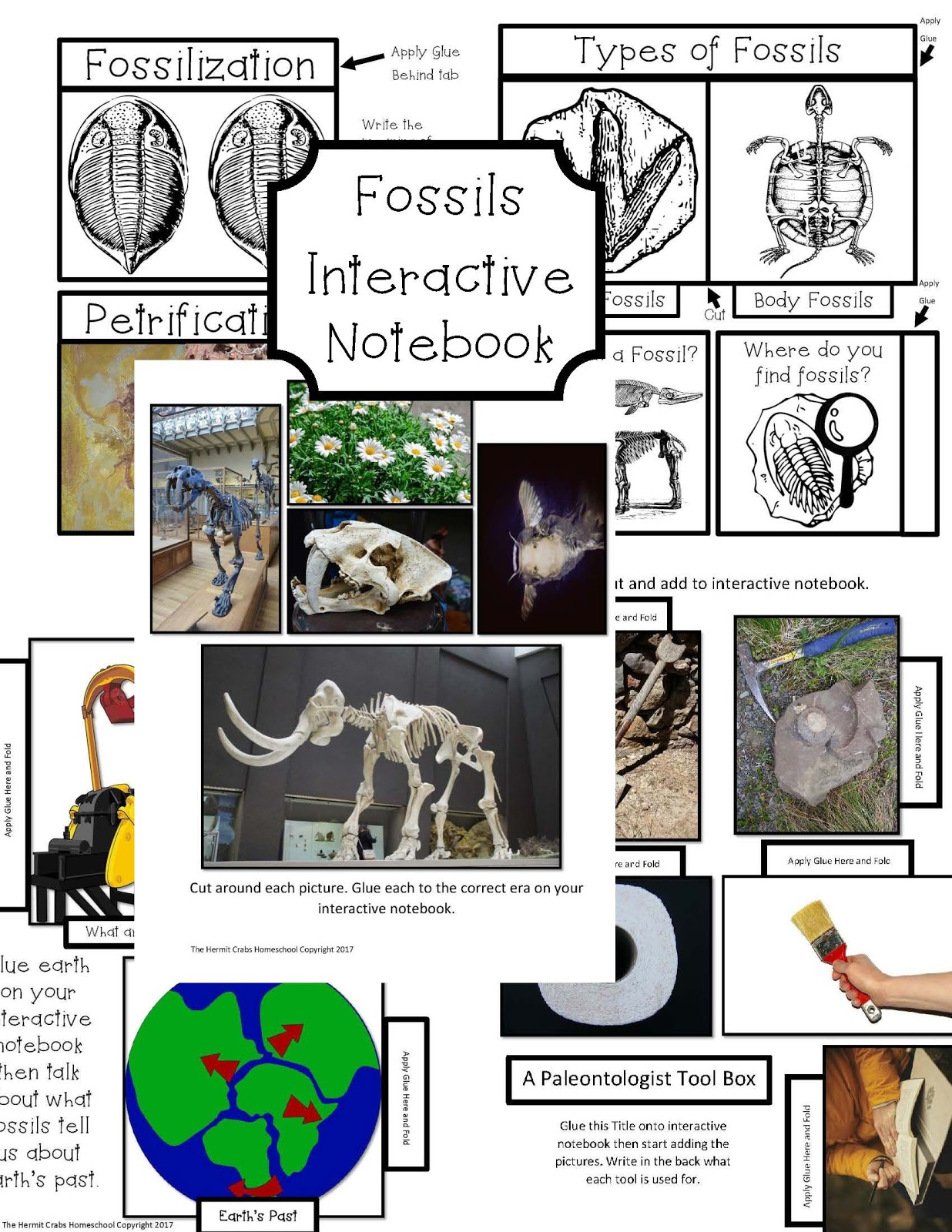 The Hermit Crabs Homeschool Fossils Unit Study