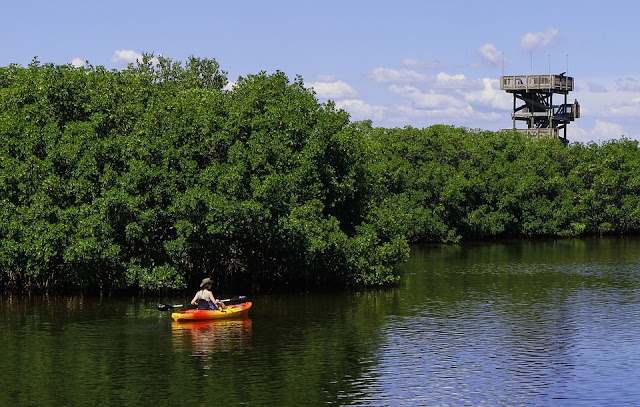 kayaking in mangroves watchtower