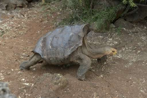 Impressive! Meet Diego the sex-crazed tortoise who saved his species 1