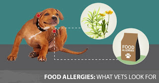 Allergies in Dogs - Treat Through Nutritional Supplements