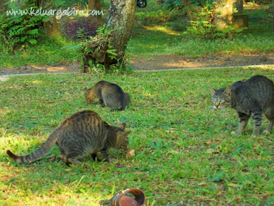 Keluarga Biru di Kebun Raya Purwodadi